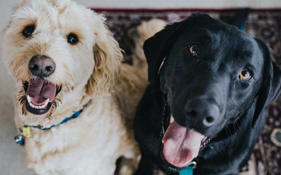 AQJ 83: Whole Foods for Dogs – Canine Nutritionist David Agius