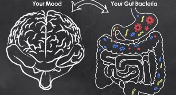UC 271: The Gut Brain Connection