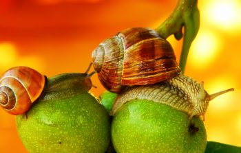 TWIW 45: Insect damage makes fruit healthier