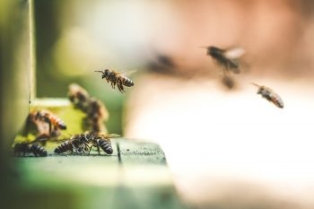 TWIW 47: Europe bans bee killing pesticide