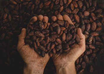 GVP 01: Cacao & Raw Chocolate – What It Is & Why It's So Good For You