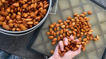 QCC 164: Activating Nuts & Seeds – Why, How & When